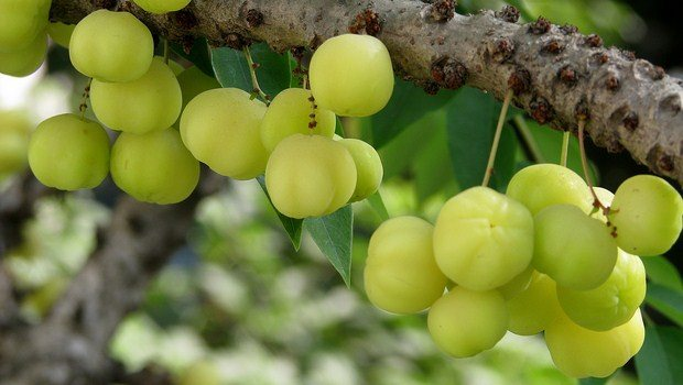 vitamin c rich foods-indian gooseberry
