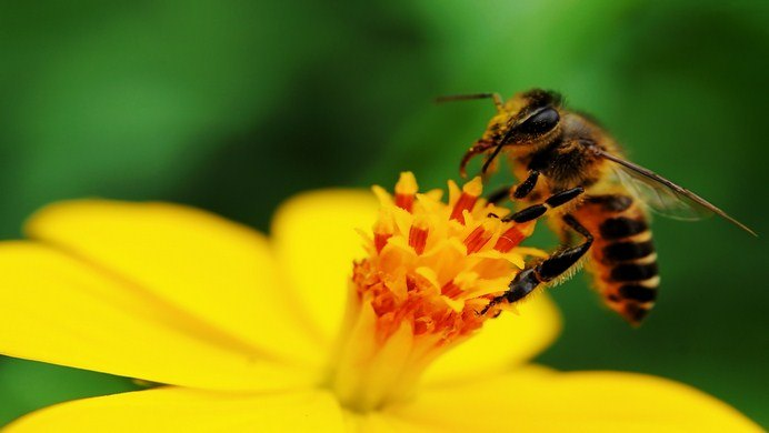 home remedies for bee stings swelling