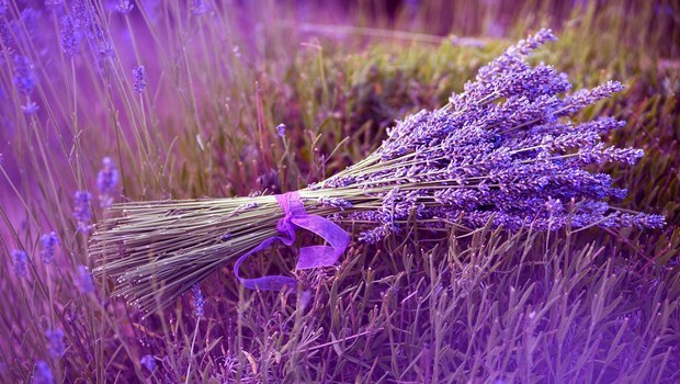 how to cure anxiety-lavender