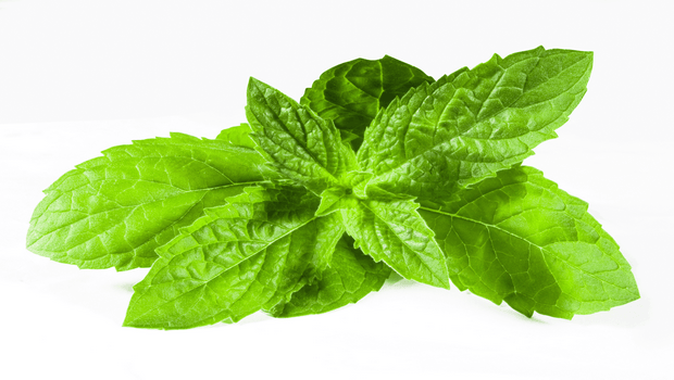 how to get rid of phlegm in throat-mint and eucalyptus leaves