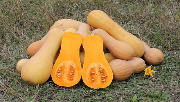 how to treat osteoporosis-pumpkin or squash