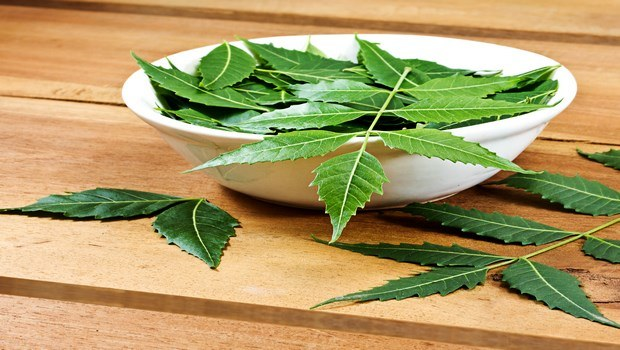 how to treat scarlet fever-neem leaf paste