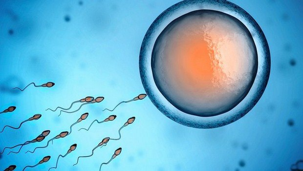 top 10 natural home remedies to increase sperm count in males are revealed