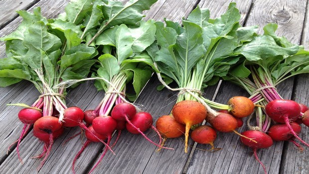 foods to improve memory-beets