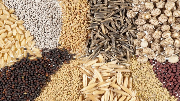 foods to improve memory-seeds