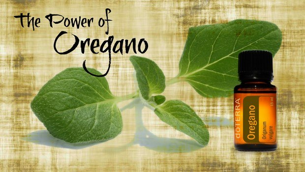 home remedies for chest pain-oregano oil