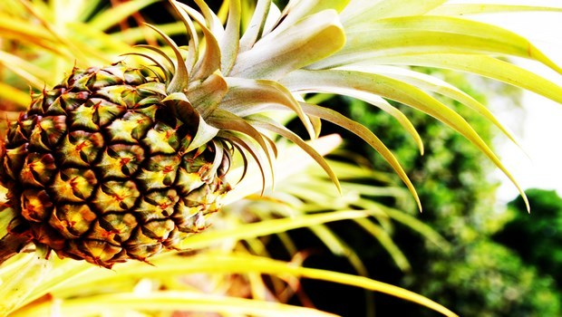 home remedies for osteoporosis-pineapple