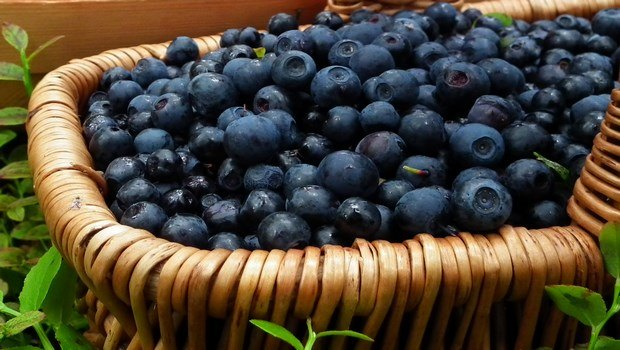 how to treat eye floaters-try bilberry remedy