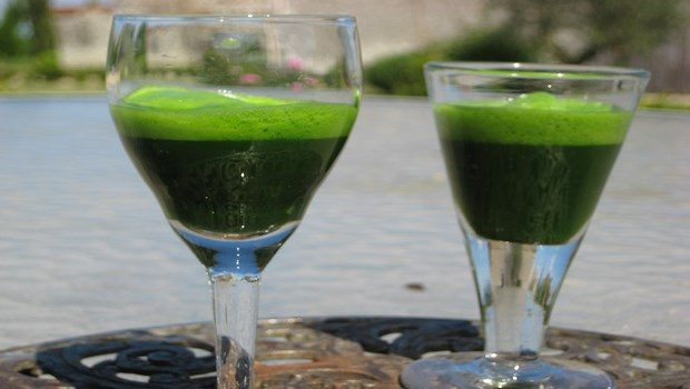 how to stop tooth decay-wheat grass juice