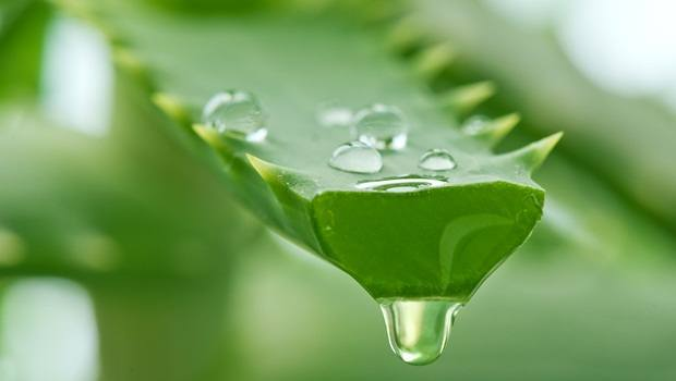 how to treat kidney infection - aloe vera