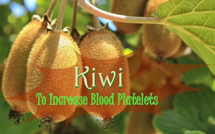 foods to increase blood platelets - kiwi