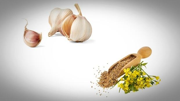 home remedies for ear wax removal - garlic with mustard oil or sesame oil