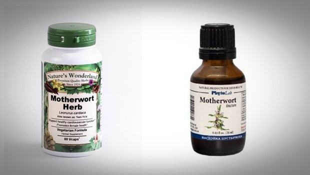 home remedies for hyperthyroidism - motherwort herb and motherwort tincture