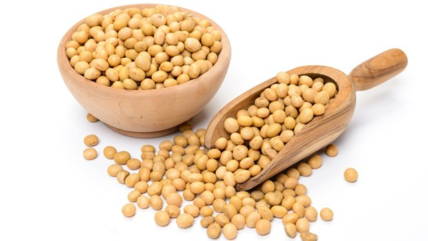 soybean is better than animal fat