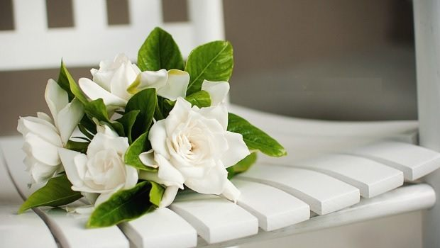 flowers for girls-Gardenia