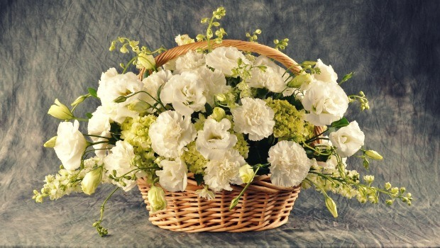 flowers for girls-white carnation