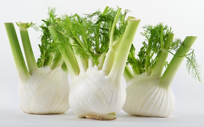 how to stop excessive burping - fennel
