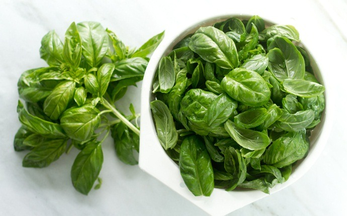 how to stop excessive burping - holy basil