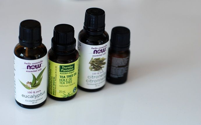 tea tree oil for scalp - tea tree oil for treating flaky scalp