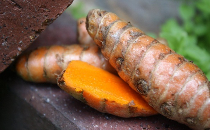 how to use turmeric for acne - turmeric in skin cleanser