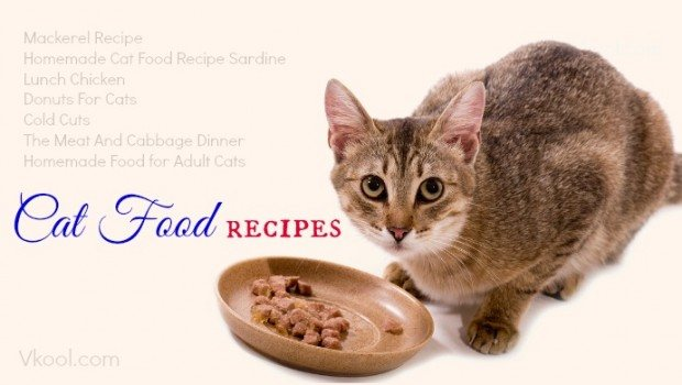 10 best homemade cat food recipes food recipes every cat has their own nutritional needs that are quite strict with the high levels of protein calcium phosphorus and especially forumfinder Gallery
