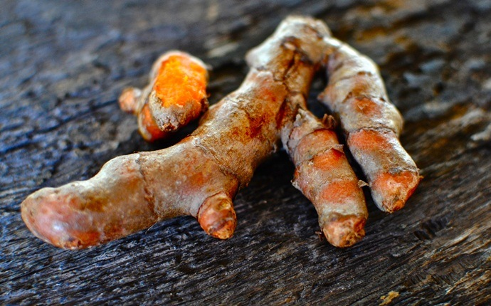 home remedies for whooping cough - turmeric