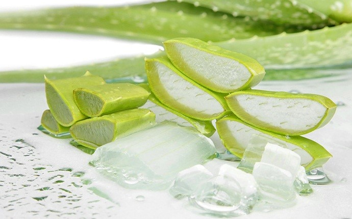 aloe vera for stretch marks - aloe vera and water