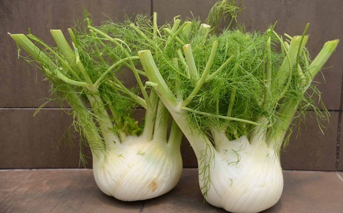 natural diuretic foods - fennel