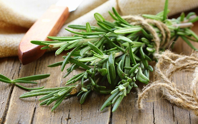 how to make aftershave - rosemary homemade aftershave for oily skin