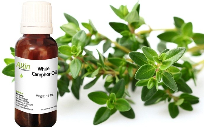 tea tree oil for nail fungus - tea tree oil, coconut oil, and camphor oil
