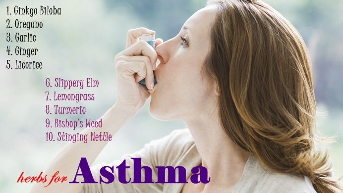 natural herbs for asthma