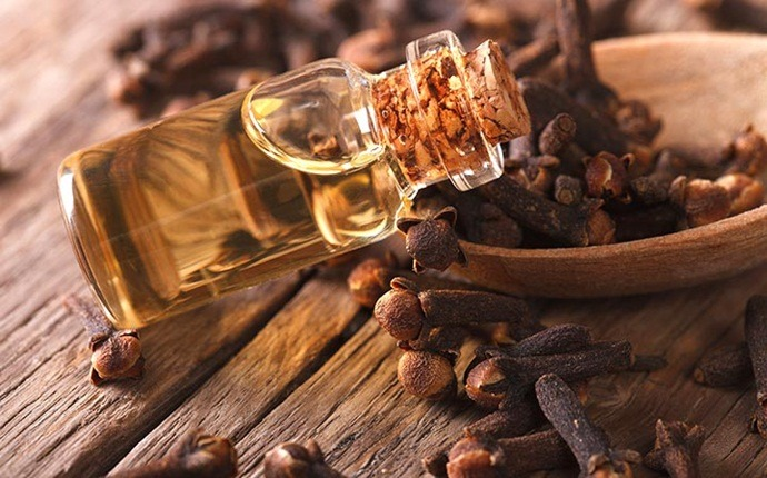 home remedies for sore gums - clove oil