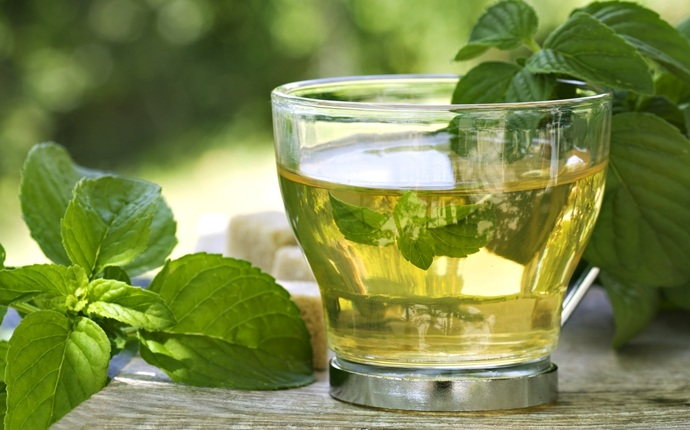 treatment for cirrhosis - green tea