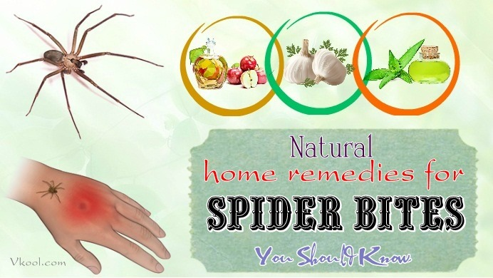 home remedies for spider bites on legs