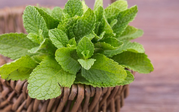 home remedies for pigmentation marks - mint leaves