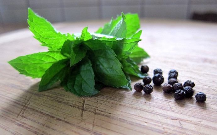home remedies for wheezing - mint remedy