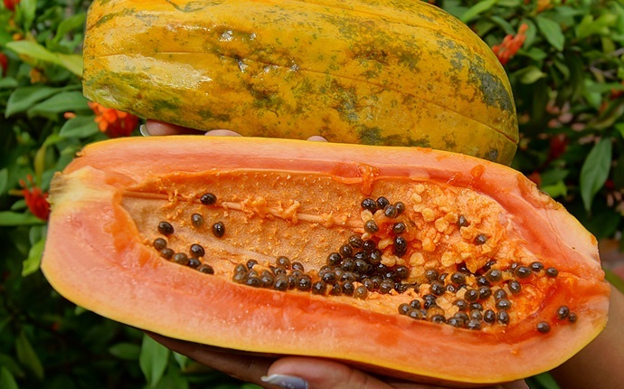 home remedies for pigmentation marks - papaya