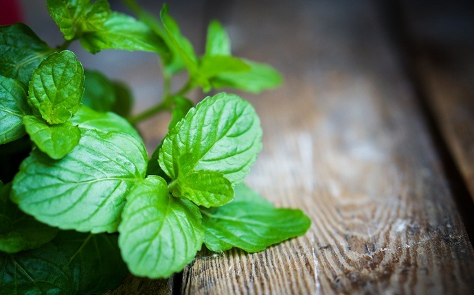 home remedies for colic - peppermint