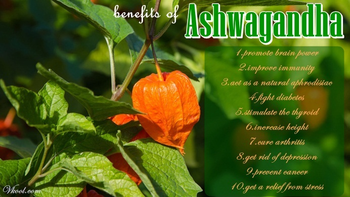 10 Health Benefits Of Ashwagandha Root You Should Know