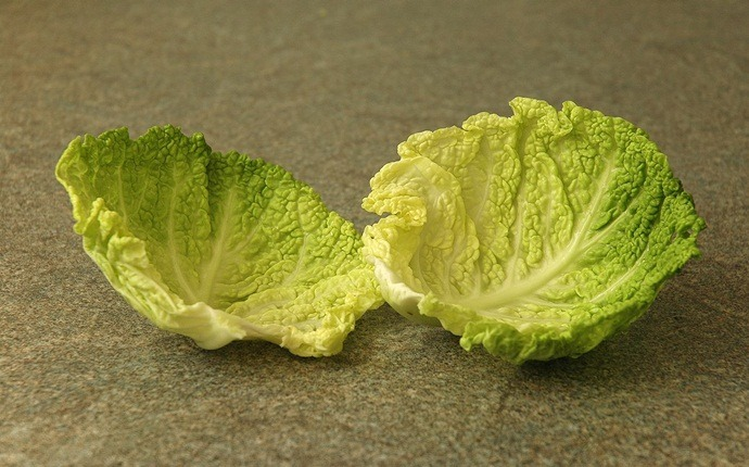 how to treat a hematoma - cabbage leaves