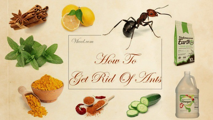 10 Ways On How To Get Rid Of Ants Naturally And Fast