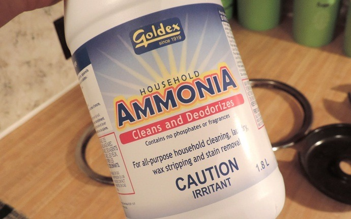 treatment for yellow jacket sting - ammonia