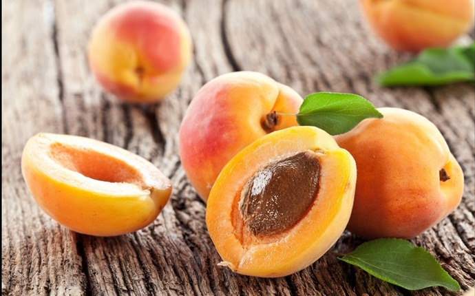 fruits with high water content - apricots
