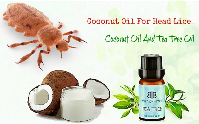 coconut oil for head lice - coconut oil and tea tree oil