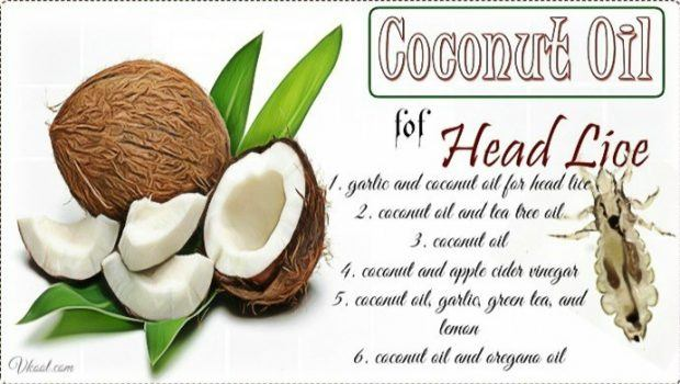 how to use coconut oil for head lice