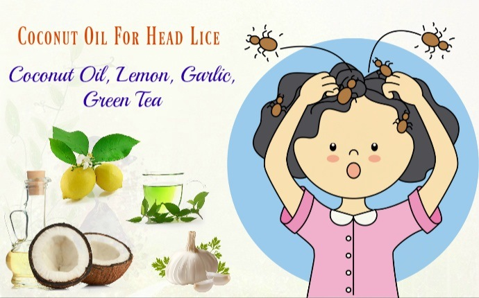 coconut oil for head lice - coconut oil, lemon, garlic, green tea