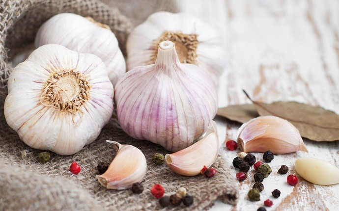 scalp acne treatment - garlic