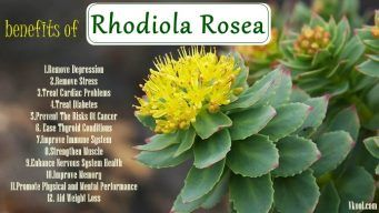 health benefits of rhodiola rosea
