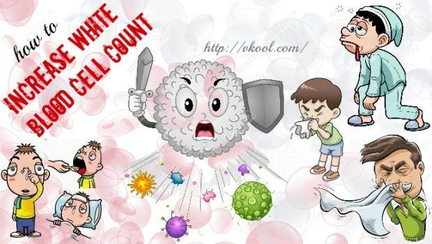 how to increase white blood cell count naturally