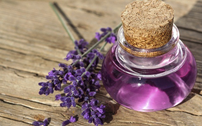 home remedies for oral thrush - lavender oil